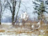 899031.winterweeds.jpg